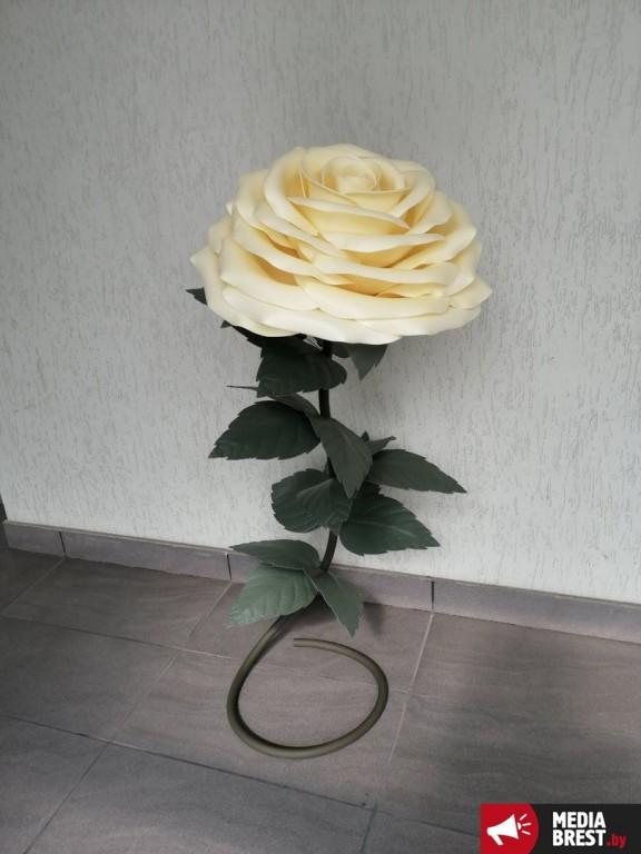 Светлана и её огромные цветы