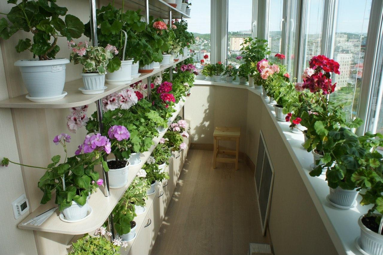Сад на застекленном балконе.