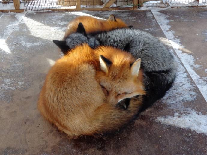 они Законы в японии о животных состоянии