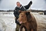 В деревне под Бобруйском разгуливала сбежавшая медведица