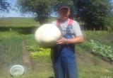 Житель Бреста нашел на участке своей тещи огромный гриб-дождевик