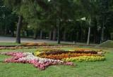 Ко Дню города «Коммунальник» подарил Бресту сразу несколько цветочных подарков