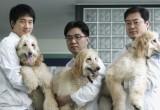 Корейская компания клонировала уже более 800 собак