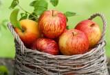Брестский район окунется в атмосферу фестиваля яблок