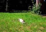 Причиной остановки работы метеостанции в Беловежской пуще стал кот