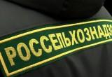Россельхознадзор выявил нарушения у «Савушкина продукта» и запретил поставку продукций двух белорусских предприятий