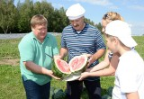 В Беларуси хотят вырастить 500 тонн арбузов