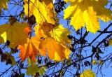 За неполный сентябрь в Бресте были установлены 3 температурных рекорда