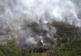 Почти все районы Брестской области ввели запрет на посещение лесов