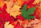 Чем знаменателен день 1 октября?