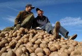Беларусь стала лидером среди стран СНГ по производству мяса, картошки, молока и яиц