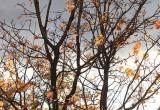 25 октября по Беларуси объявлен оранжевый уровень опасности из-за сильного ветра
