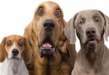 В Беларуси с 2017 года изменяются ставки налога для владельцев собак
