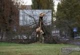Сильный ветер в Бресте: повалены деревья, поврежден автомобиль