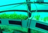 Первый в мире подводный огород появился на побережье Италии