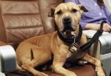 БелЖД: перевозить домашних животных станет проще