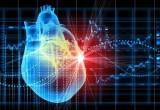 В Беларуси успешно проведены первые операции по пересадке 3D-моделей сердца
