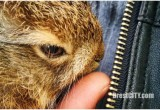Водитель автобуса в Бресте спас маленького зайца, выскочившего на дорогу