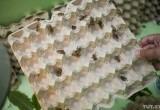 В Беларуси начнется продажа замороженных сверчков и муки из них