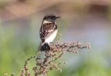 На Полесье обнаружен новый для Беларуси вид птиц
