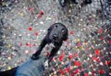 Акция по устройству бездомных животных пройдет в Бресте в эту субботу