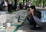 В Бресте прошла ежегодная экологическая акция «За зеленую Брестчину»