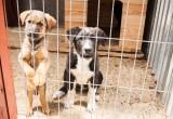 1 июля в Бресте пройдет благотворительная акция помощи бездомным животным