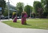 «Коммунальник» активно украшает Брест ко Дню города