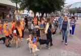 «Животные не мусор, их нельзя выбрасывать»: волонтёры провели благотворительную акцию помощи безнадзорным животным