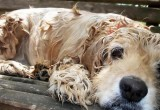 В Бресте откроется центр помощи бездомным животным «Лисабона»