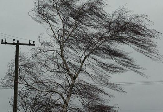 На 14 и 15 сентября по Беларуси объявлен оранжевый уровень опасности из-за сильного ветра
