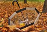 13 октября из-за сильного ветра в Беларуси объявлен оранжевый уровень опасности