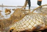 Более 500 раков браконьеры выловили в Малоритском районе