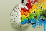 Что объединяет творческих людей? Новые исследования в области работы мозга