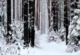 90-летний житель Брестского района пошел в лес за дровами и заблудился