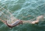 В Брестской области в начале февраля выявлено 14 нарушений природоохранного законодательства