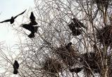 До 15 августа в Беларуси запрещено уничтожать гнезда птиц