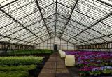 Работники брестского «Коммунальника» к 8 Марта вырастили больше 45 тысяч цветов