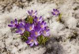 Настоящая весна к 8 Марта? Какая погода будет на этой неделе в Бресте?