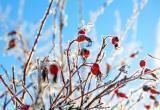 Вернется ли весна? Какая погода ожидается на этой неделе в Бресте?