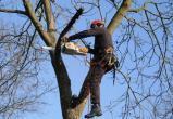 Деревянные баталии: стоит ли срезать деревьям ветки?