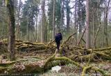 В Беловежской пуще пройдут съёмки документального фильма