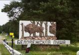 Беловежская пуща планирует встретить более 500 тысяч гостей