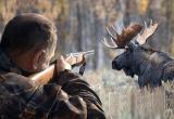 Двое браконьеров из Брестского района застрелили оленя в Беловежской пуще
