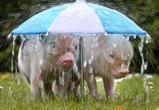 Снова дожди? Прогноз погоды в Бресте на выходные