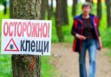 Число пострадавших от укусов клещей в Беларуси превысило 1,8 тысячи человек