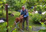Раненого недалеко от Бреста лосёнка доставили в Беловежскую пущу