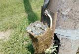 Синички в Бресте свили гнездо внутри электрического щитка