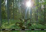 В Барановичском, Пинском и Кобринском районах ввели запрет на посещение лесов