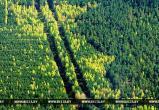 В 15 районах Брестской области запрещено посещать леса